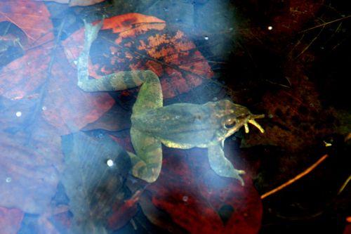 2 grenouilles 18 mars 010.jpg