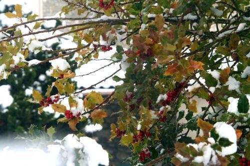 neiges ilex 20 déc 2010 069.jpg