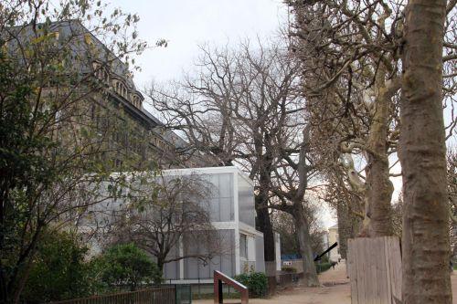 1 zelkova carp blog paris 24 déc 2012 pa 012.jpg