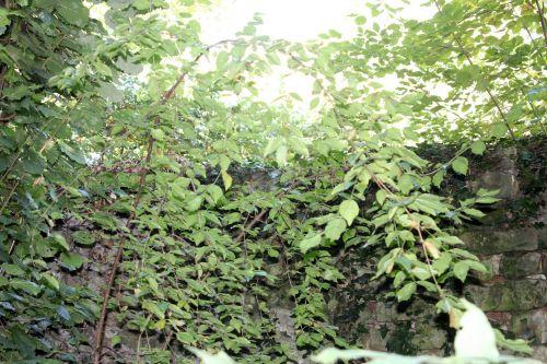4 cornus mas veneux 30 oct 2012 002.jpg