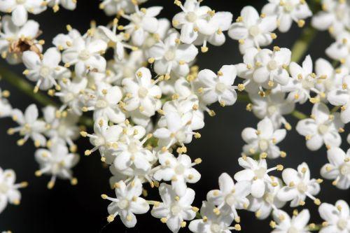 5 nigra 29 mai 2012 031.jpg
