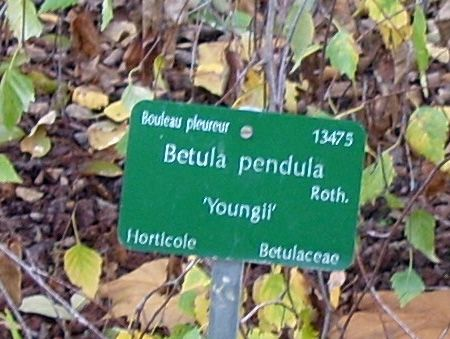 betula étiquette paris 17 nov 072.jpg