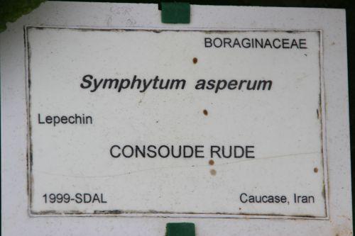5 symphytum asperum marnay 8 mai 2014 054 (2).jpg