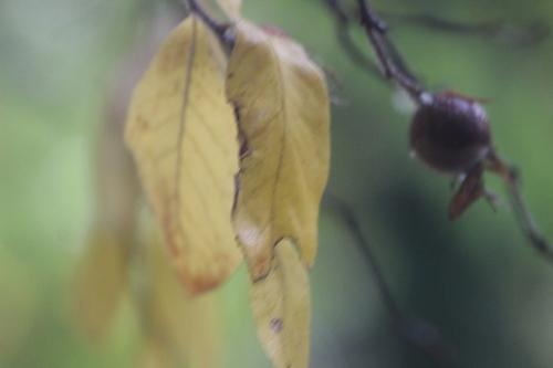 10 mespilus veneux 28 oct 2015 008 (3).jpg