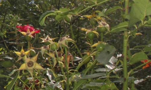 6 red parfum fr romi 6 sept 2015 011 (5).jpg