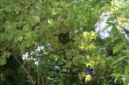 13 palmensis souffre 24 juillet 2008 025.jpg
