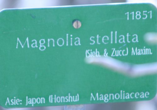 magnolia stel paris 23 mars 126.jpg