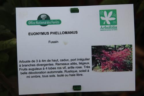 euo phellomanus barres 12 oct 2013 005 (2).jpg