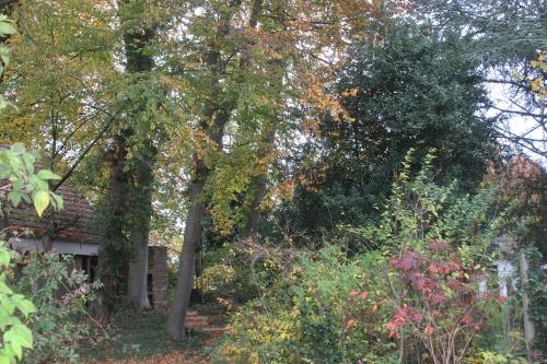 2 automne veneux 6 nov 2015 032 (2).jpg