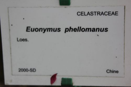 8 euo phellomanus marnay 21 sept 2013 067 (7).jpg