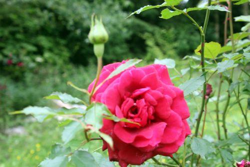 7 red parfum romi 12 juin 2013 009.jpg