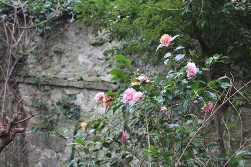 5 contessa lavinia veneux 24 mars 2015 007.jpg