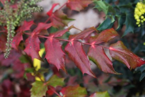 6 hivernant veneux 15 janv 215 006.jpg