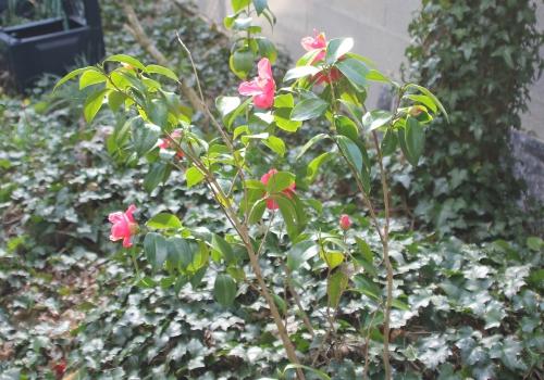 spring promise veneux 13 avril 2015 033 (1).jpg
