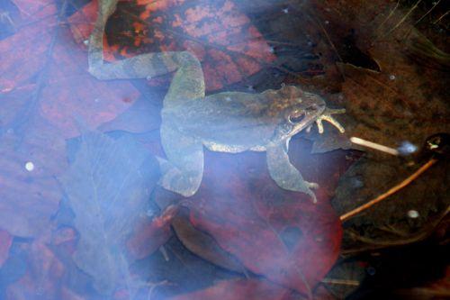 grenouille 18 mars 007.jpg