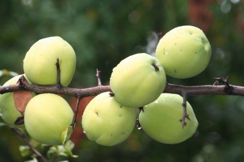 chaen catha fruits paris 26 sept 2010 216.jpg