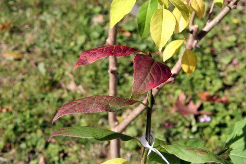 2 euo pla arbofolia 9 oct 2010 008.jpg