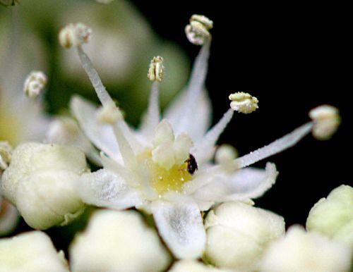 c bretsch fleur 11 mai 2011 p 017.jpg