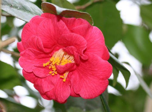 adolphe fleur 29 fev 034.jpg