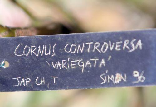 d cornus contr var  gb 6 oct 2012 056 (3).jpg