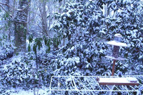 neige palm oiseaux 17 dec 011.jpg