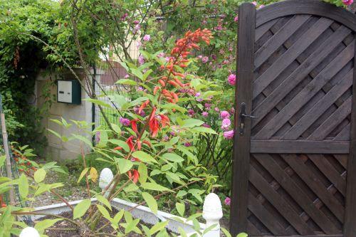 a erythrina marnay 23 juin 2013 003 (2).jpg