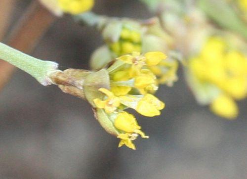 2008 cornelian r 18 fev 2008 009.jpg