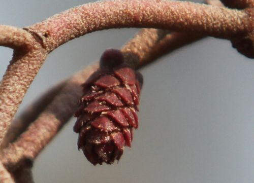 fem 5 pollen sorques 20 mars 2012 010.jpg