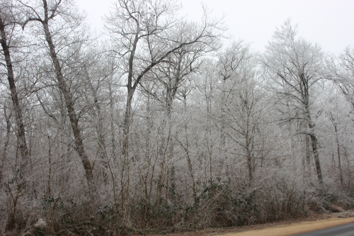 6 givre forêt veneux 1 janvier 006 (2).jpg