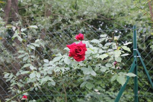 10 red parfum romi 29 mai 2015 018.jpg