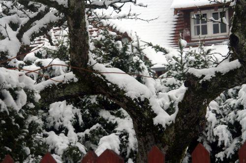 neige 20 déc 2010 066.jpg