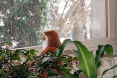 armel fenêtre 8 janvier 005.jpg