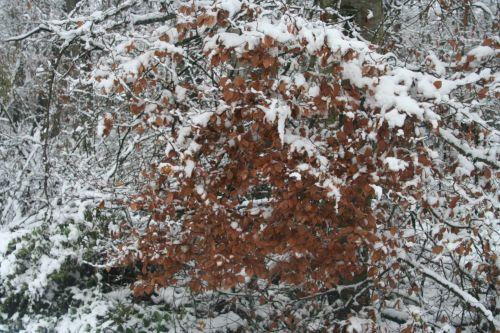 neiges hêtre 20 déc 2010 087.jpg