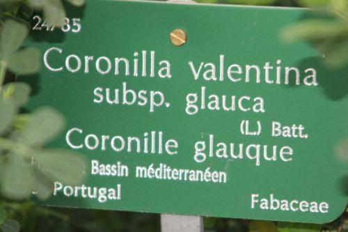 coronilla val 3 paris 21 janv 2012 162.jpg