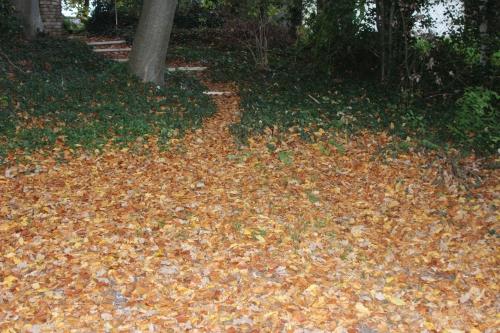 1 feuilles mortes veneux 3 nov 2015 012.jpg