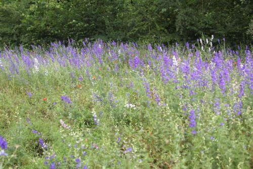 prairie paris 23 juin 2012 442.jpg