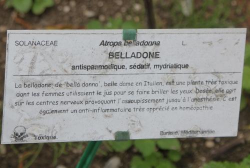 10 belladone marnay 19 juil 2015 104 (2).jpg