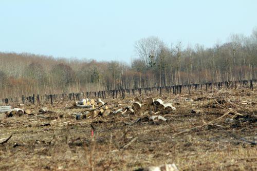 11 romi 9 mars 2012 013.jpg