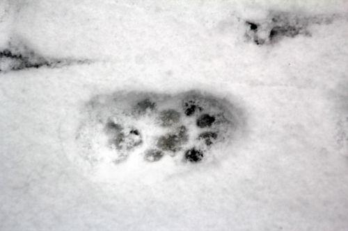 3 neige 19 janvier 2013 007.jpg