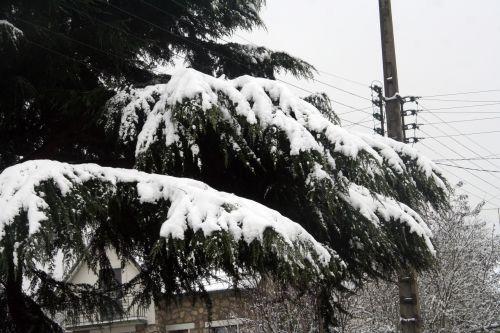 neige 20 déc 2010 062.jpg