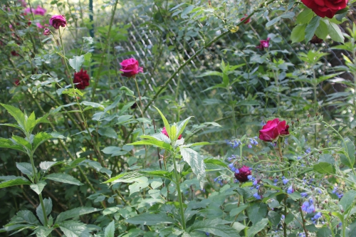 5 la belle alsacienne romi 9 juin 2015 009 (1).jpg