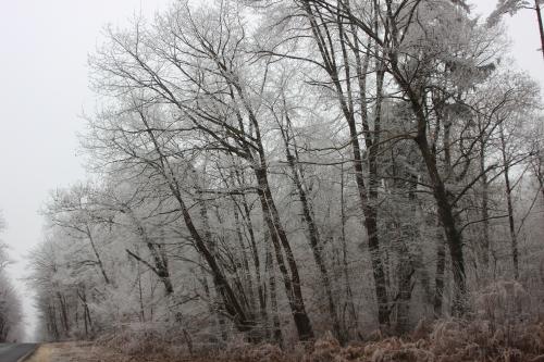 8 givre forêt veneux 1 janvier 006 (4).jpg