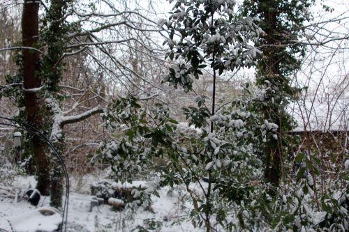 7 rocaille neige 19 janvier 2013 012.jpg