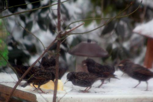 neige veneux 16 janv 2013 003.jpg