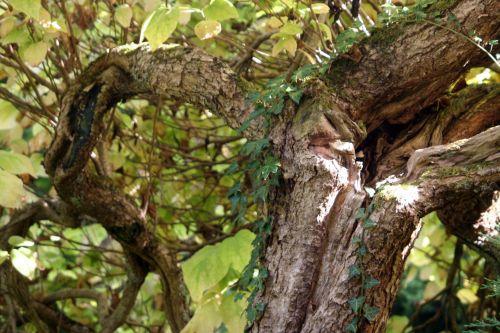 cat arbofolia 9 oct 2010 035.jpg