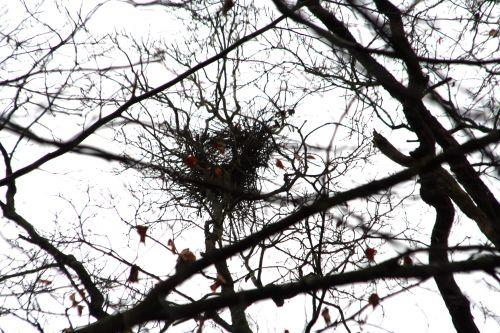 pies nid vue ouest 20 février 010.jpg