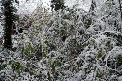 neige palmensis 29 nov 2010 008.jpg