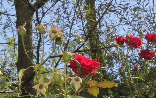 5 red parfum rec romi 6 sept 2015 011 (5).jpg