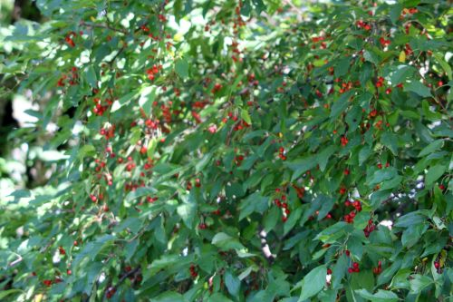 2 malus x zumi gb 16 sept 2012 120.jpg
