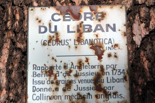 8 cedrus libani paris 24 sept 2011 056.jpg